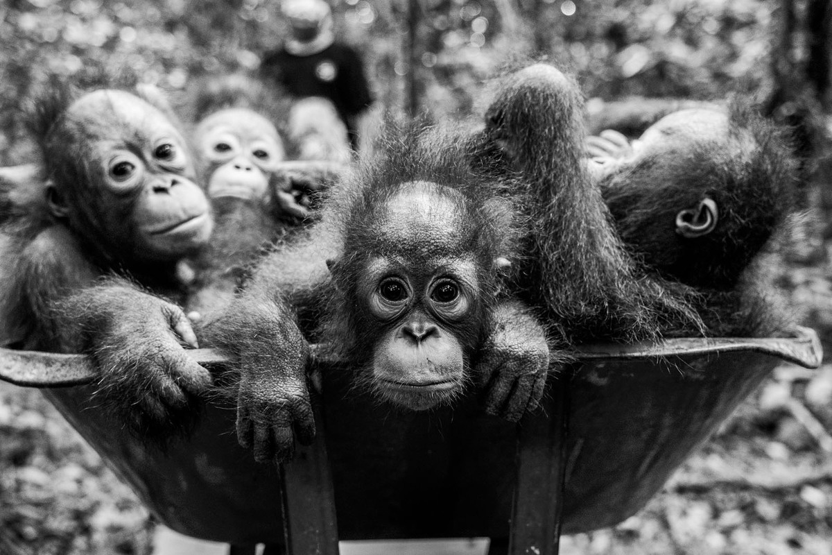 Dilla Djalil Daniel - The Forest Orphanage